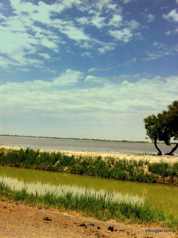 Wetlands and grasslands of the Camargue