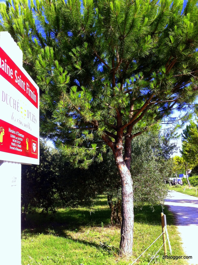 Domain Saint Firmin in Uzes