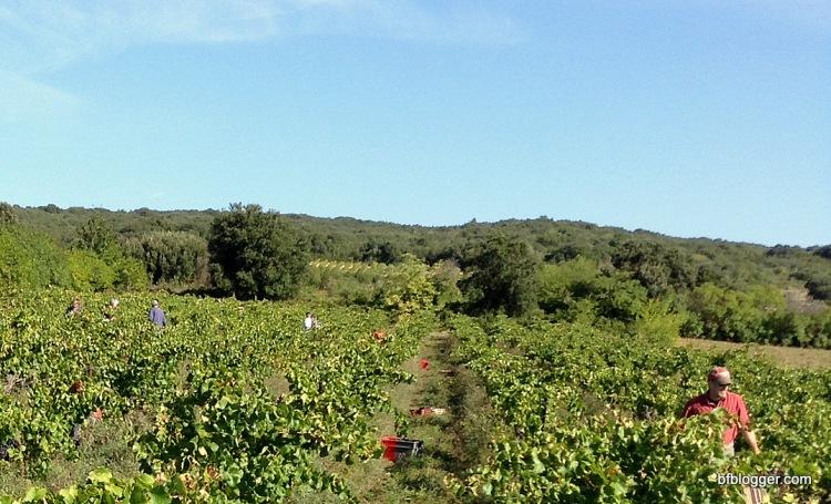 La Gramière vineyard