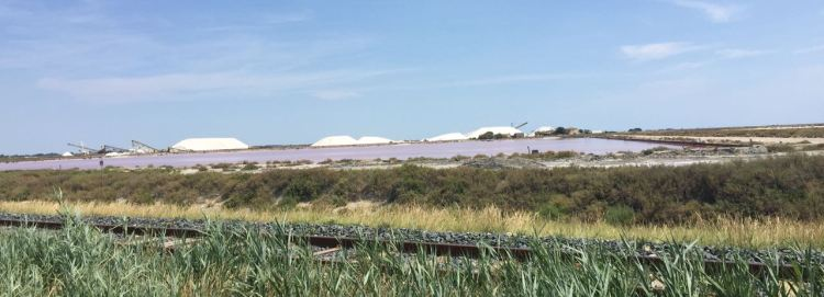 Salt processed in the Camargue