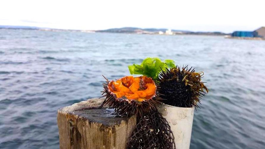 Sea urchin from Sete