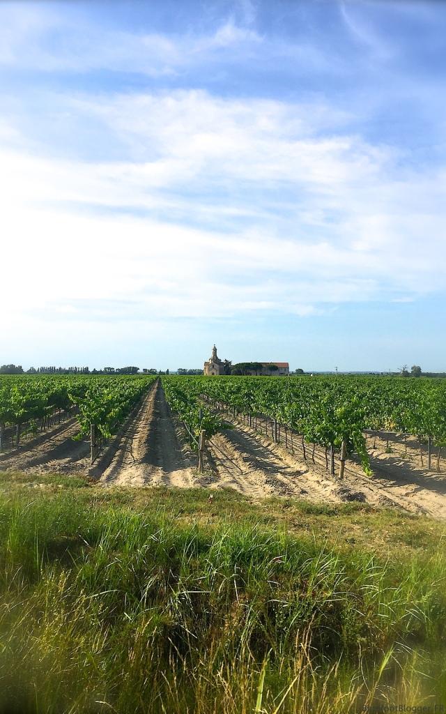 Camargue Vineyard