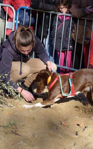 Dogs on the hunt for truffles in Place aux Herbes